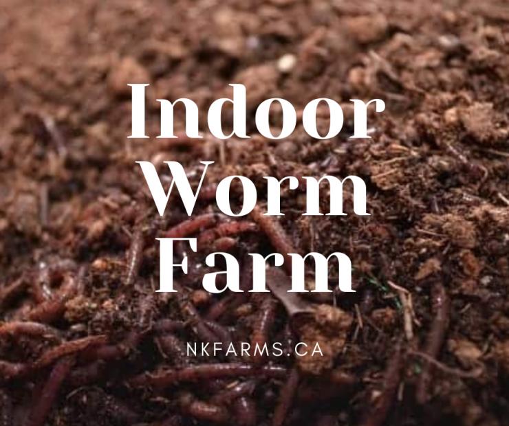 Indoor Worm Farm